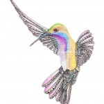 Inky Humminbird